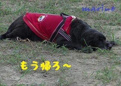 20140831marine9.jpg