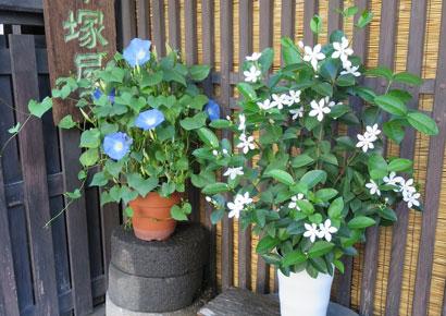 takaama2014-8se.jpg