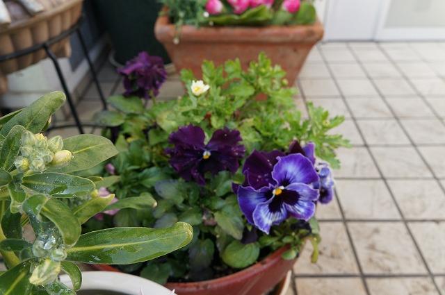 ふゆのお花