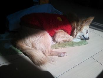 寧々 寝てるよ (350x263)