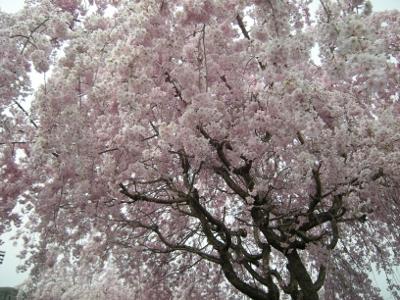 愛川公園7