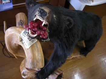 南アルプスむらはせ熊