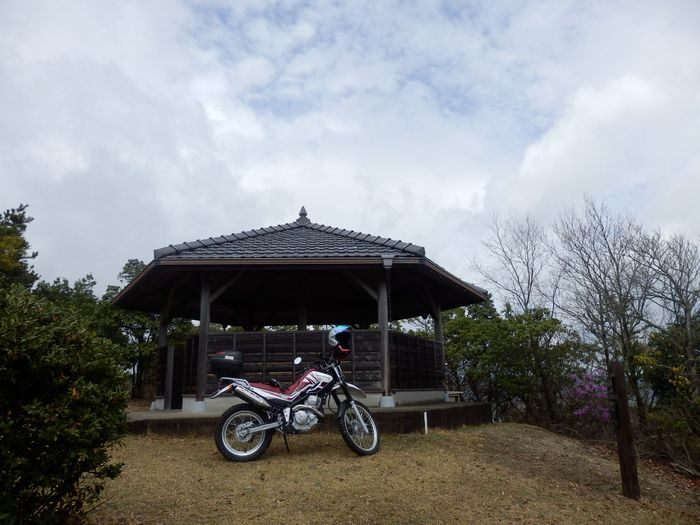 3月30日 セロー (2)