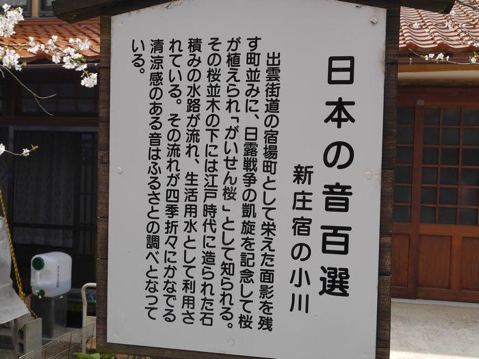 がいせん桜 (19)