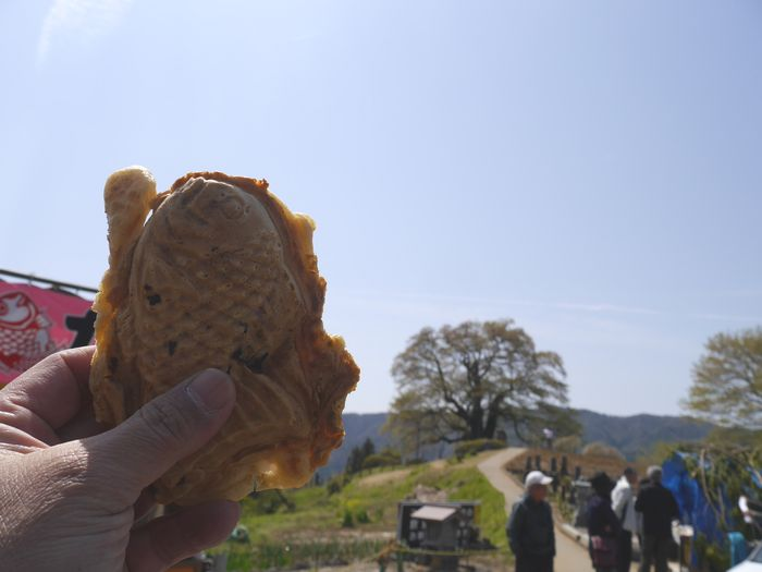 がいせん桜 (11)