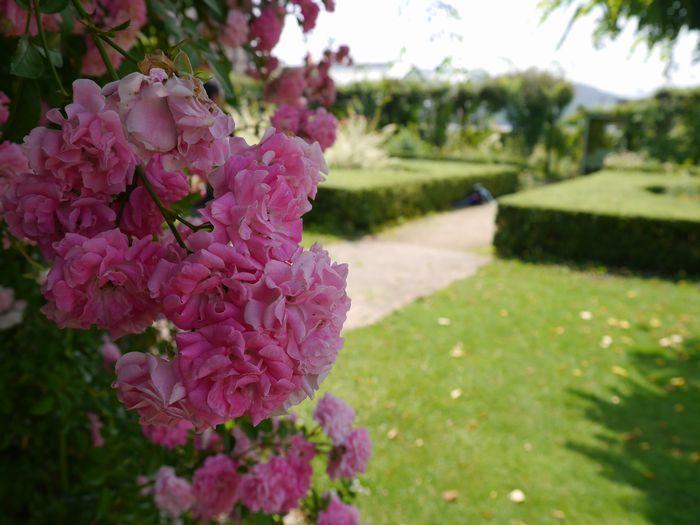 6月15日 英国庭園 (16)