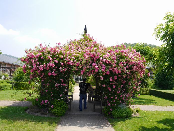 6月15日 英国庭園 (15)