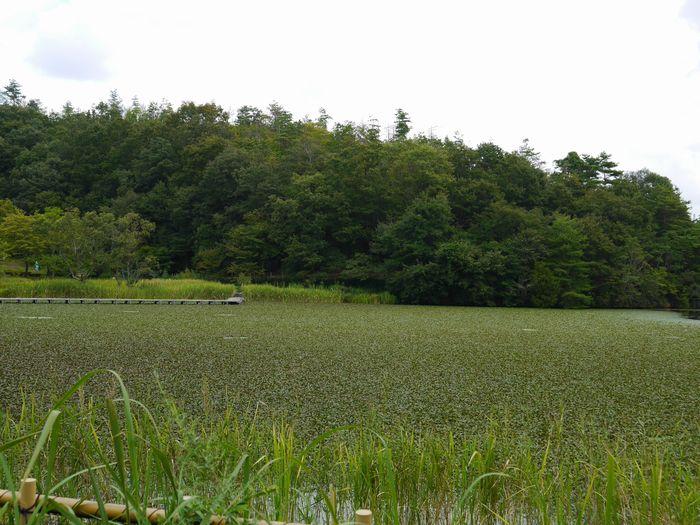 岡山県自然保護センター (6)
