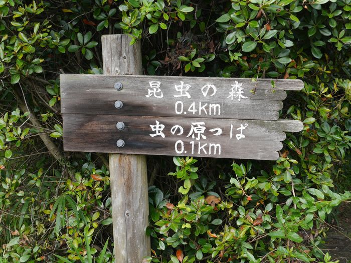 岡山県自然保護センター (22)