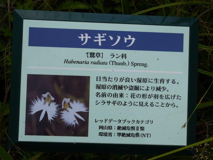 岡山県自然保護センター (16)