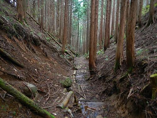 201405_odawara_mishima_kodo_10.jpg