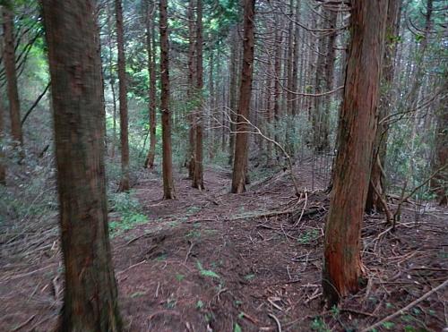 201405_odawara_mishima_kodo_11.jpg
