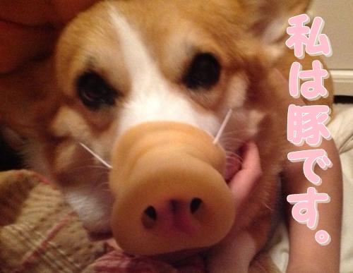 アザミ豚1