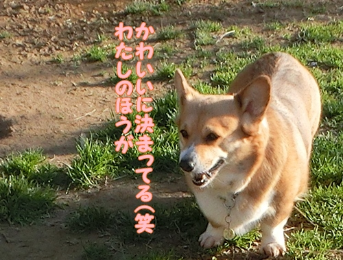 CIMG6392.jpg