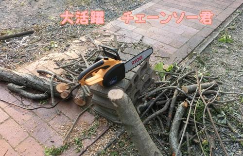 CIMG7105.jpg
