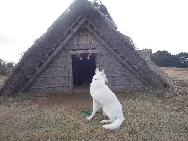 ★レオン★はこの竪穴式住居がお気に入りの様子