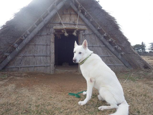 ★レオン★『この家が気に入った!住みたいなぁ!』