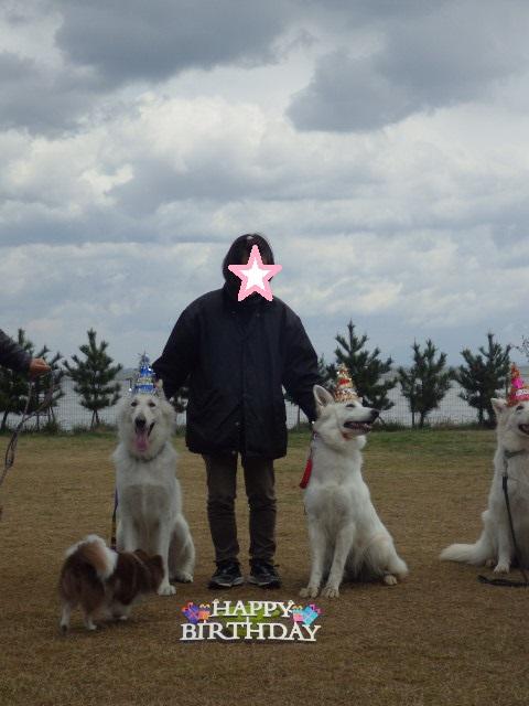 ホワイトスイスシェパード★エース★&★タキオン★3歳誕生日