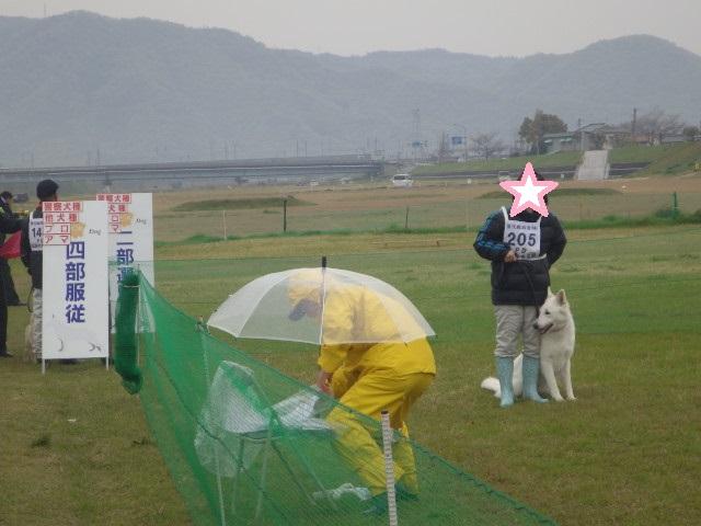 ホワイトスイスシェパード★タキオン★警察犬競技会