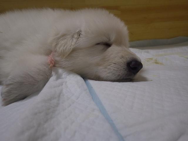 ぴんく姫の34日目の寝顔
