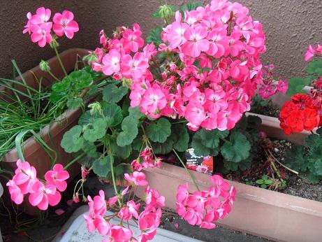 2 ベランダの花