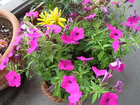 3 ベランダの花
