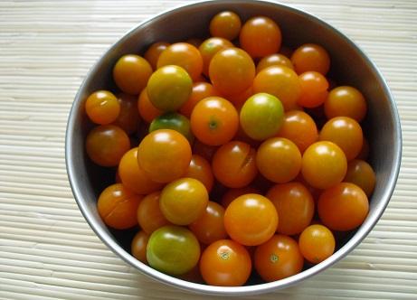 5 ミニトマトの収獲