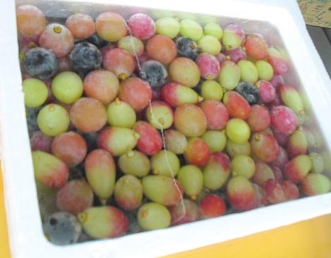 9 氷水につけて冷やしたブドウ各種