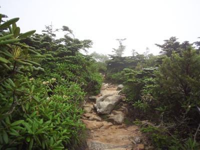 霧の登山道