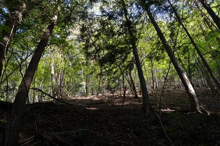 頭上の照葉樹林