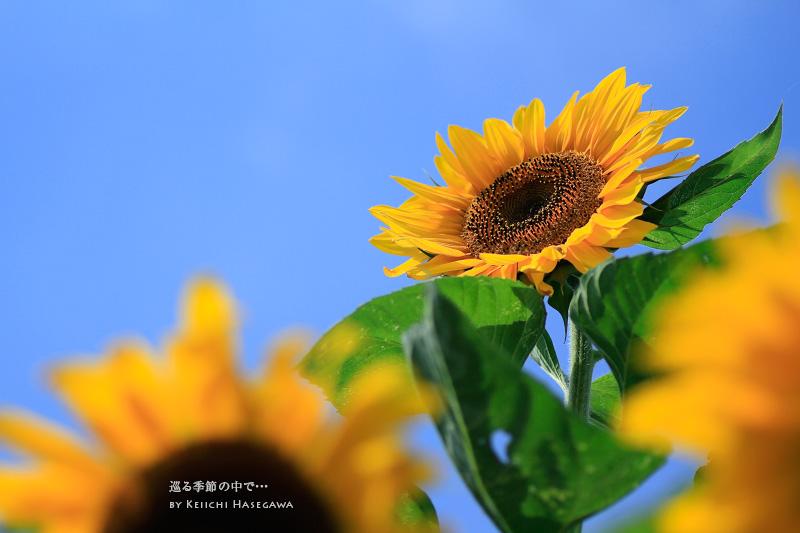 _MG_4853.jpg