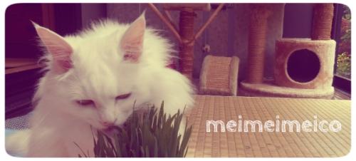 meico2014053102.jpg