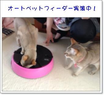 猫友さんと4