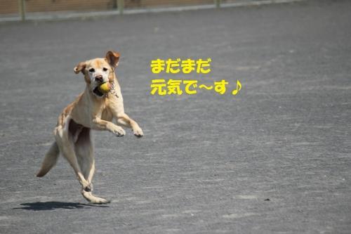 IMG_8261.jpg