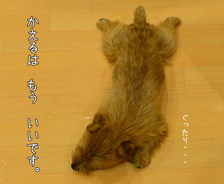 20140616_03.jpg