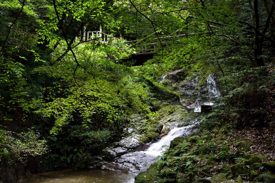 油山水の森