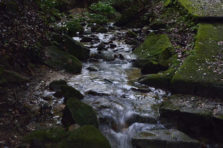 油山 水の森