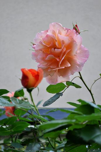 DSC_0068-20140525.jpg