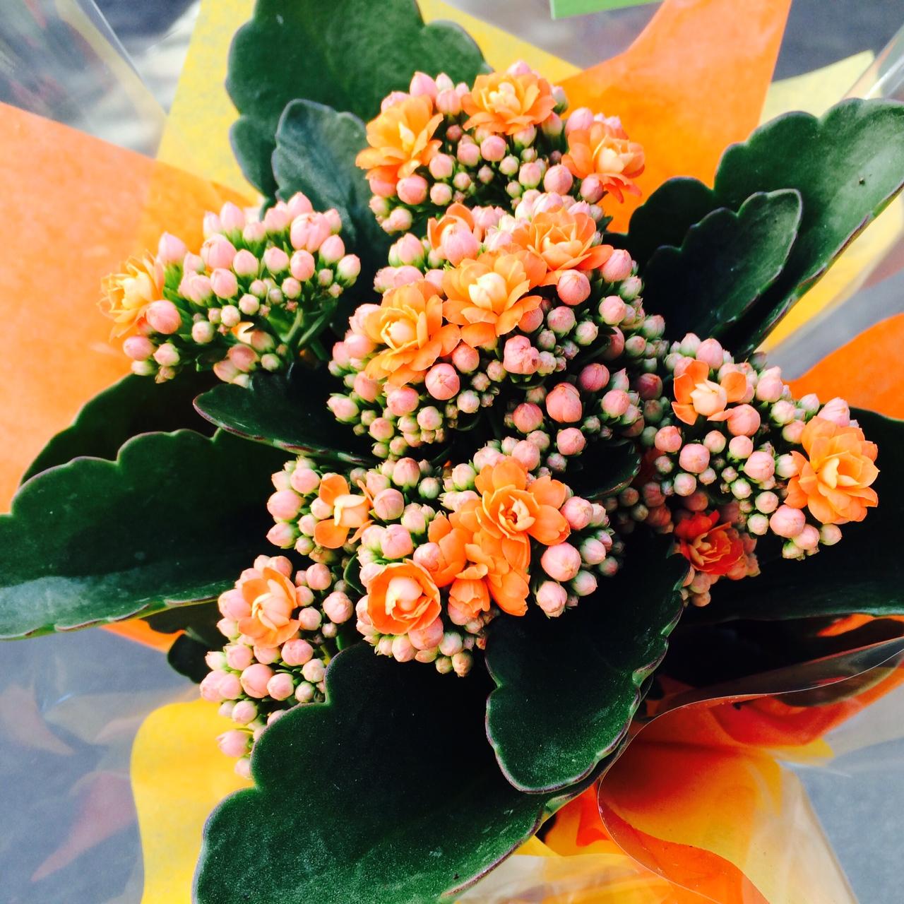 fleur_0624_2014.jpg