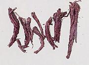 kanpo sikon