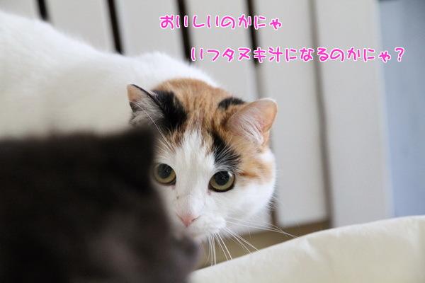 18タヌキ汁