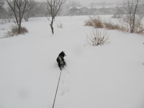 雪広場にて