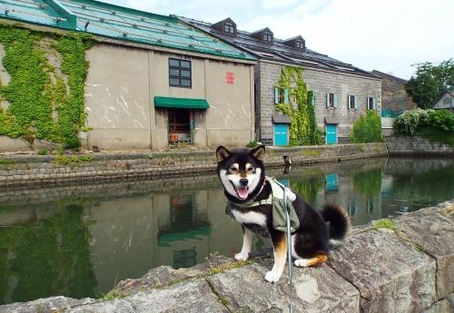 5-3_小樽運河でモテモテ出会い