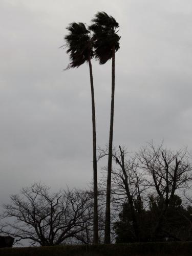 2風が (900x1200)