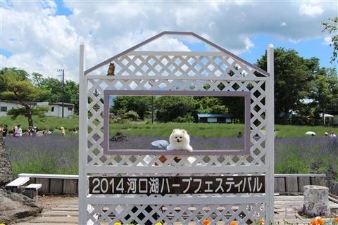 20140711_4.jpg