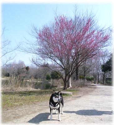 20140316見沼自然公園-1
