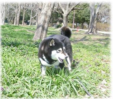 20140316見沼自然公園-3