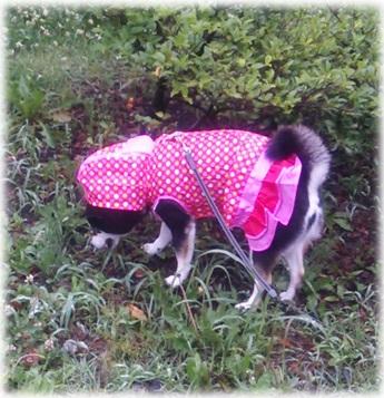 20140608雨散歩