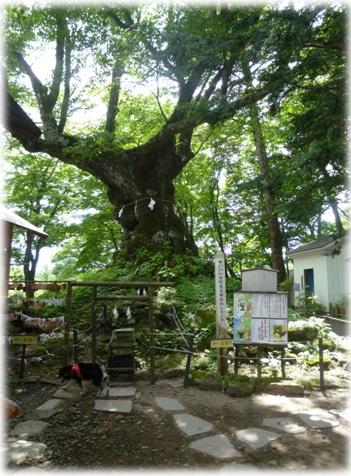 @熊野皇大神社①