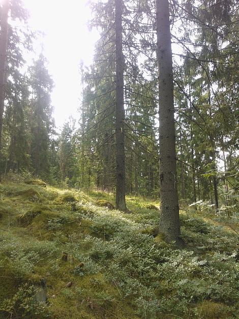 Metsä 森